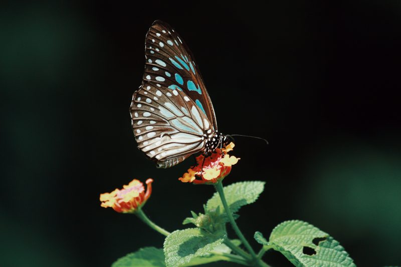 photo-of-butterfly-on-flower-